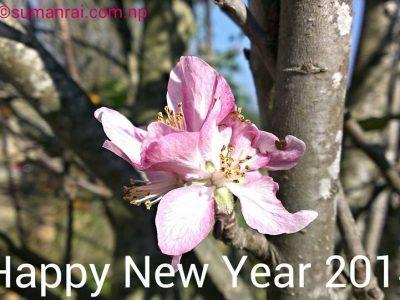 Apple's Flower. Lele Lalitpur