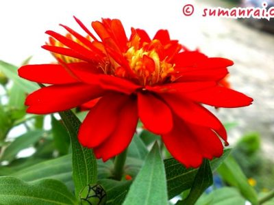 Flower AITM, Lalitpur Nepal