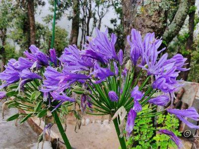 flower at daman